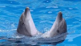 Їдемо в дельфінарій! з туристичною інтернет-агенцією Tour-U